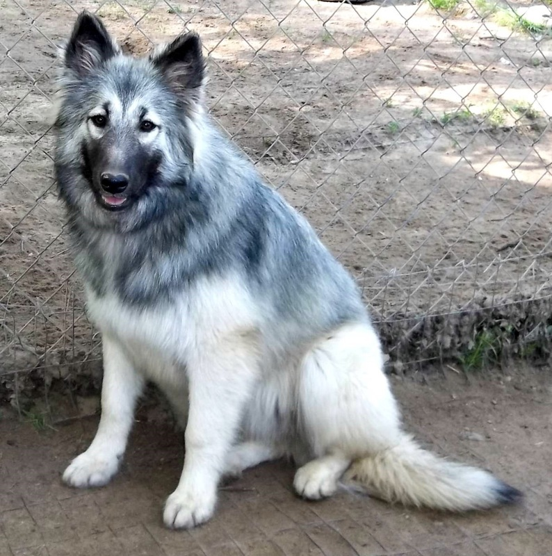 Native Dog Names For Male