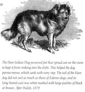 History Of The Native American Dog Majestic View Kennels